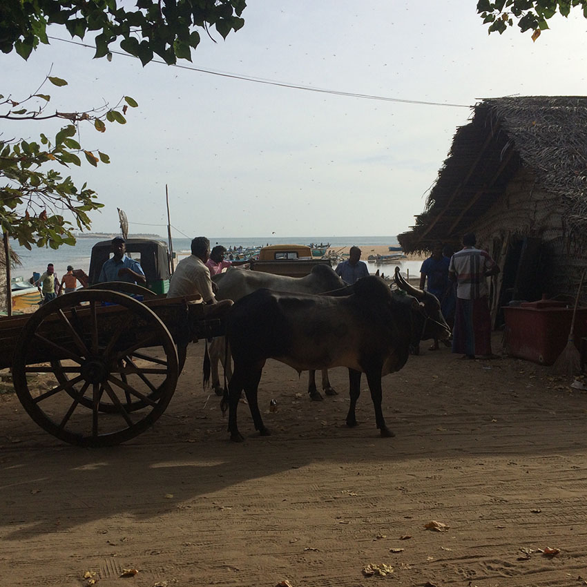 piatti_tipici_srilanka