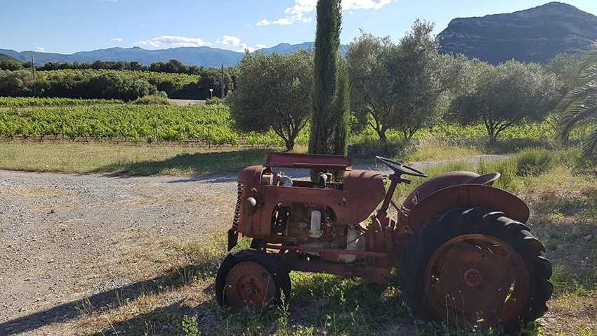 corsica_vino