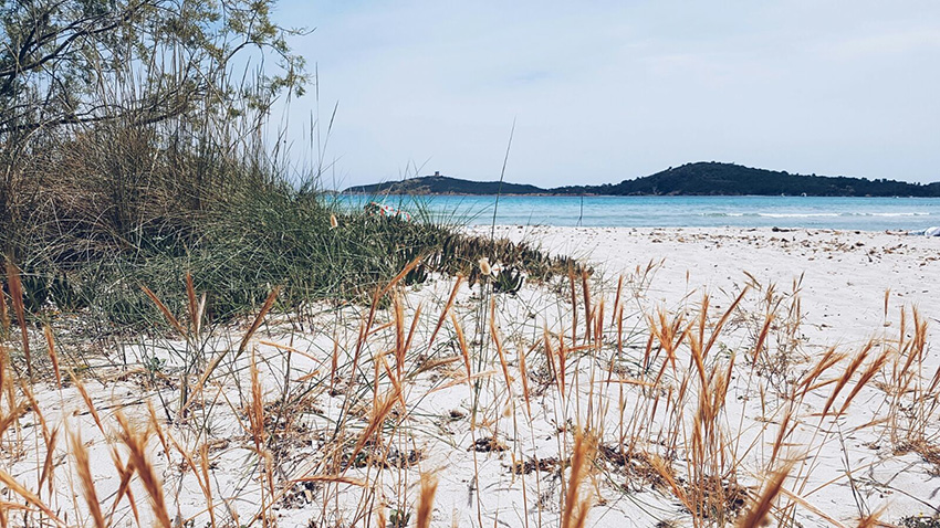 pinarello_spiaggia_pineta