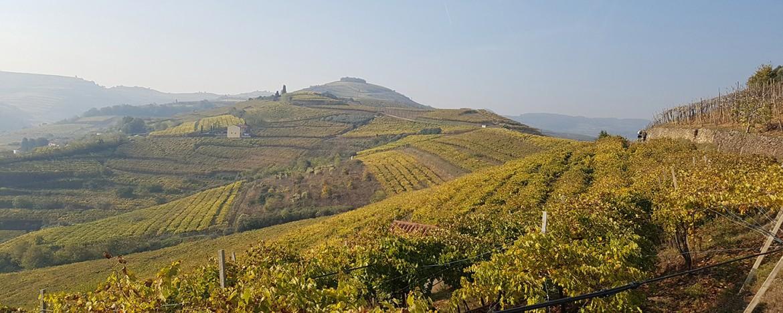 alessia_canella_recensione_vino_carugate_valpolicella-superiore1170x658