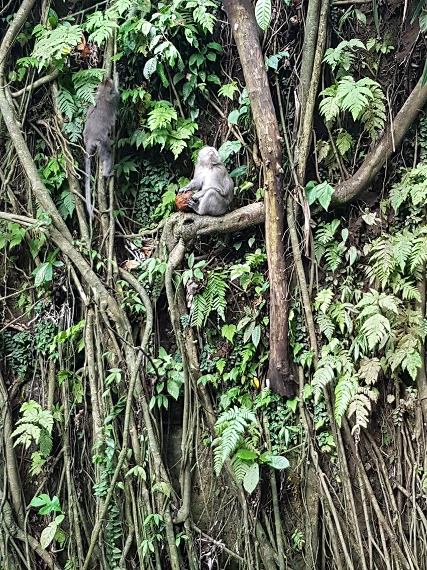 ubud_bali_foresta_cosa_visitare