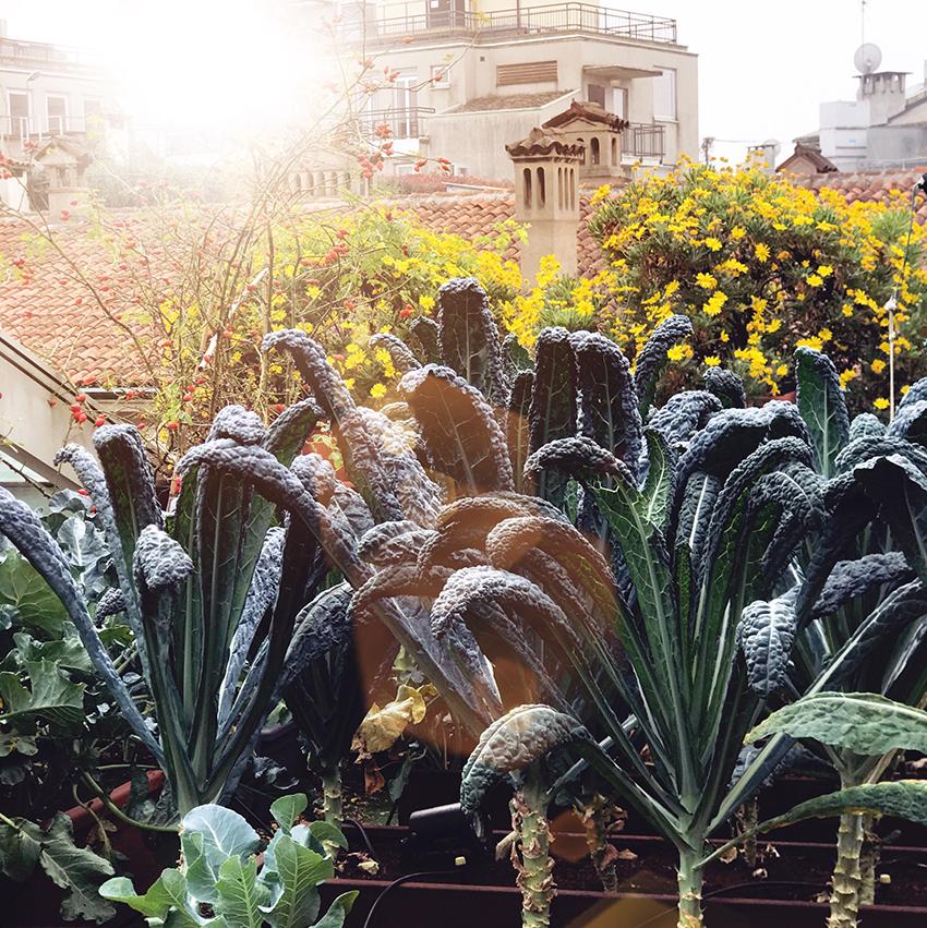 orto_botanico_hotel_milano_scala_premio