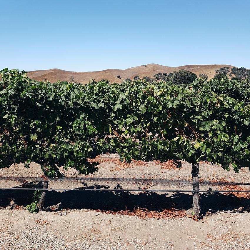 organizzare viaggio california vino