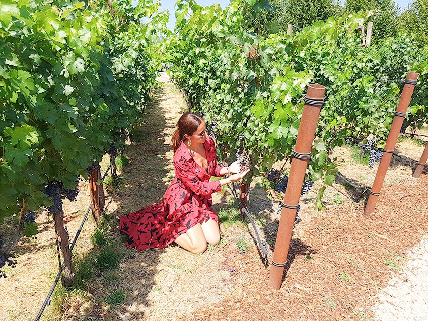 organizzare_viaggio_california_degustazioni_vino_cantine